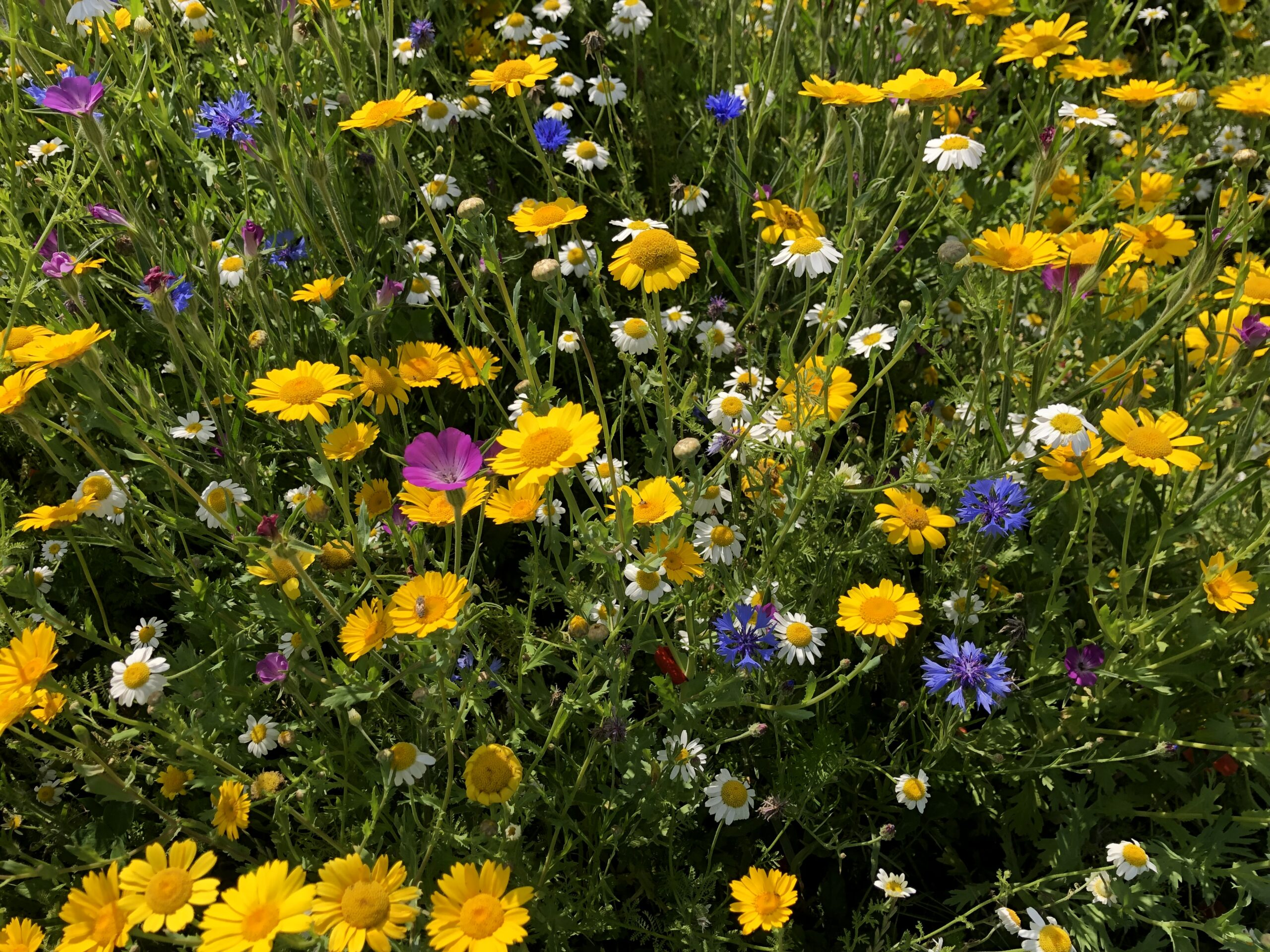 close up image of wildflowers
