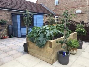 Image of garden with raised vegetable beds