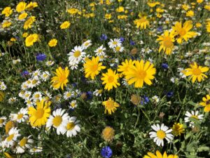 Image of close up wildflowers
